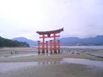 厳島.jpg