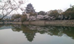 花見2012_52.jpg