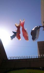 鯉幟2012.jpg