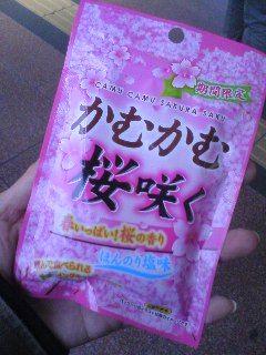 kamu桜.jpg